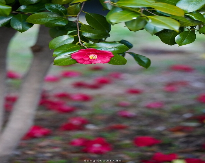 김상균의 식물원 카페 87