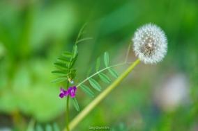 김상균의 식물원 카페 91