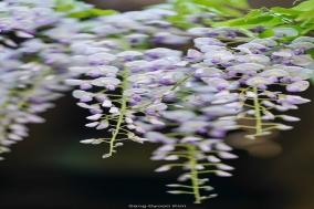 김상균의 식물원 카페 92