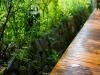 김상균의 식물원 카페 99