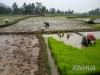 한국, 인니에도 농업기술 수출…생기원, '맞춤형' 농기계 지원