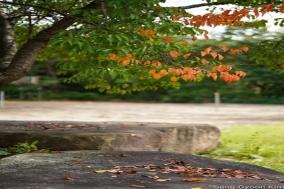 김상균의 식물원 카페 106